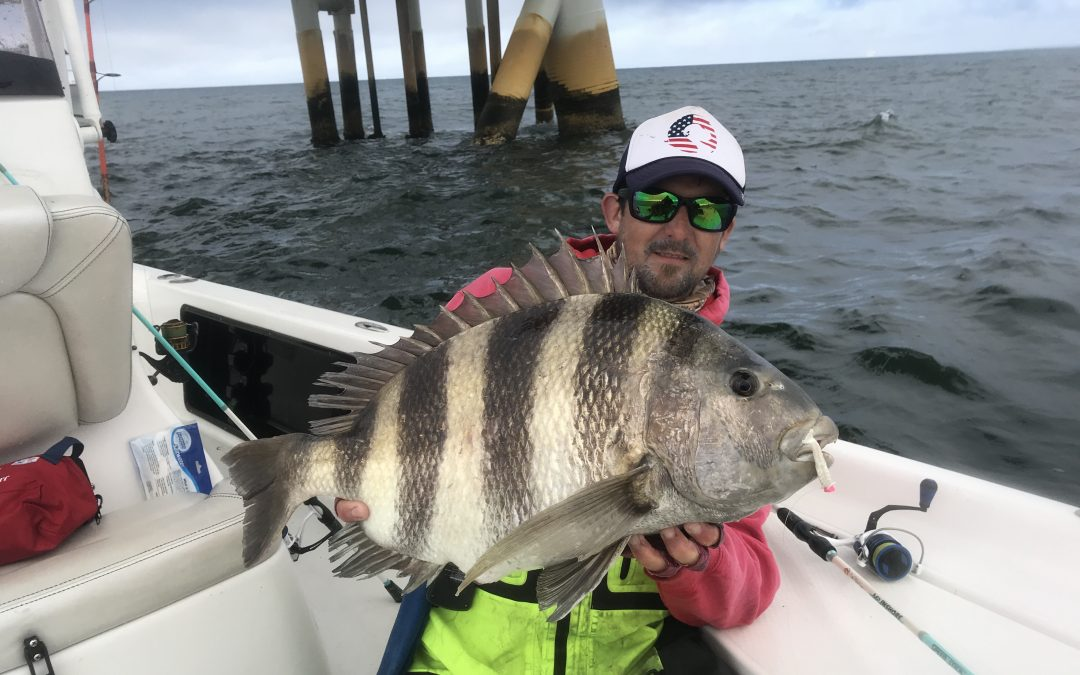 State Record Sheepshead: A Lifetime in the Making