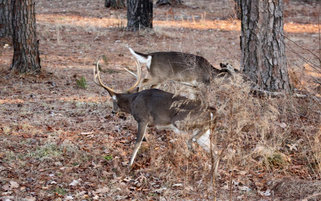 Different Tactics for Hunting Scrapes and Rubs