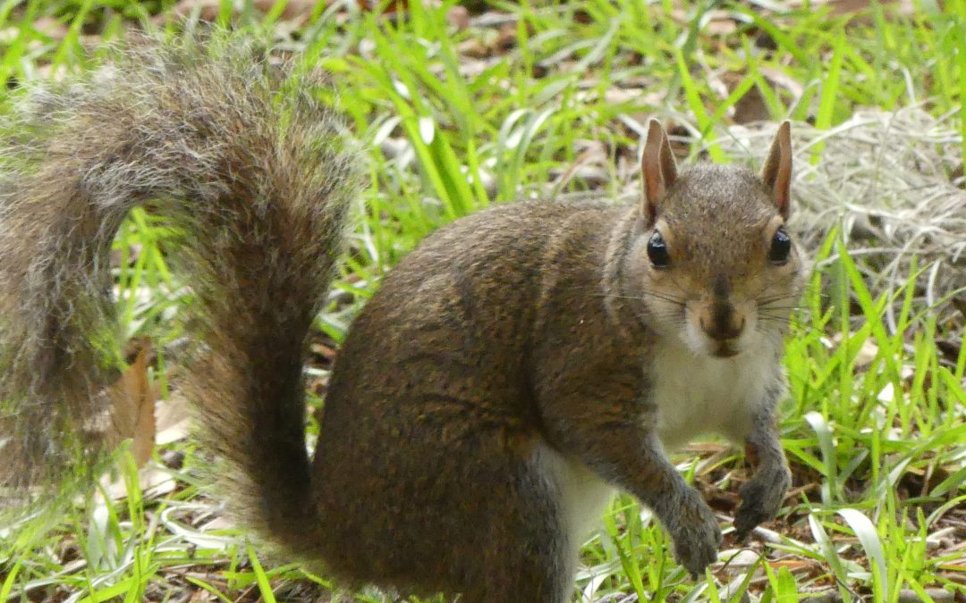 Squirrel Hunting Tips: Think Small