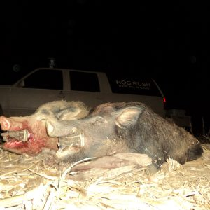 Alabama Hog Hunting Tips and Tricks for Day and Night
