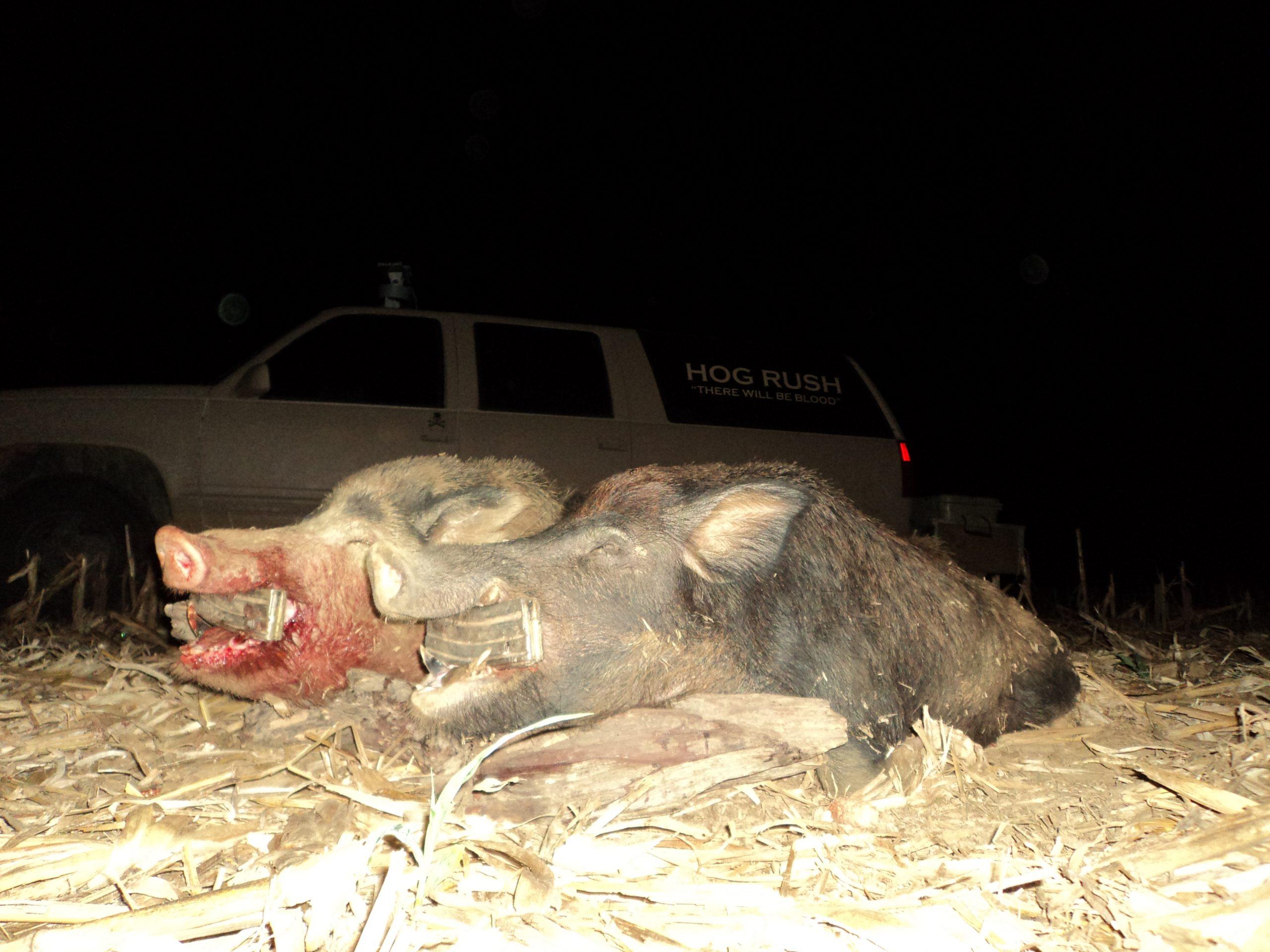 alabama hog hunting tips and Tricks best hog hunting lights for Feeder