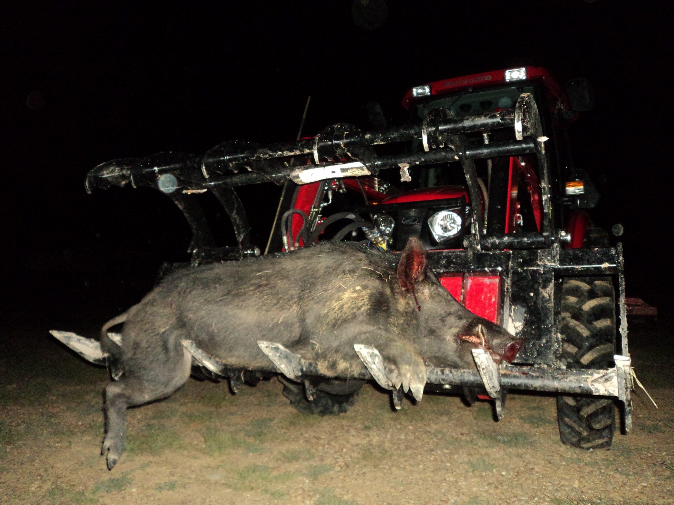 best hog hunting lights for Feeder