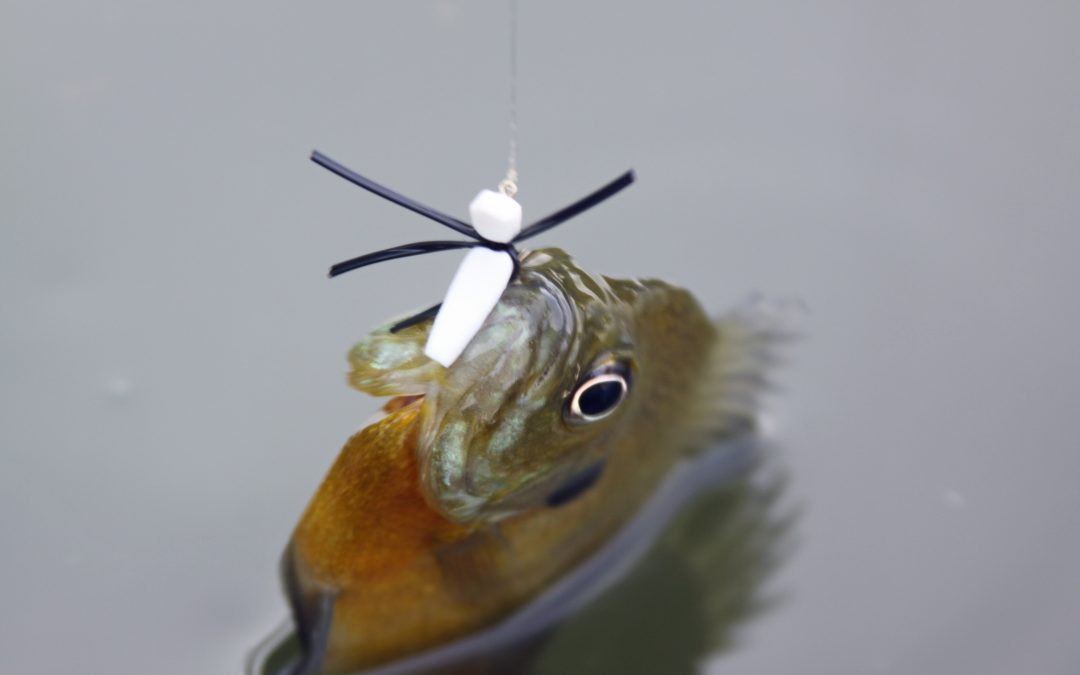Bluegill Fishing Tips For The Spring