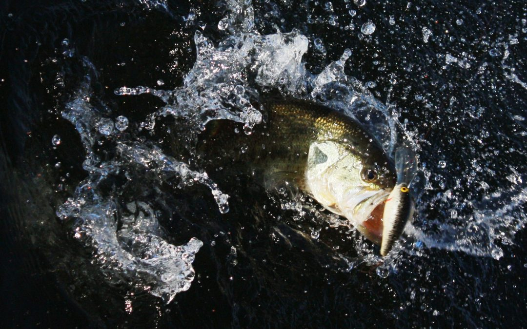 Exploring the Best Bass Fishing Vacations in Alabama