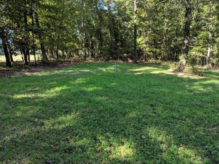 Whitetail deer food plots