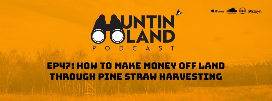How to make money off land, pine straw harvesting, slash vs longleaf pine straw, how much is pine straw per bale, pine straw prices