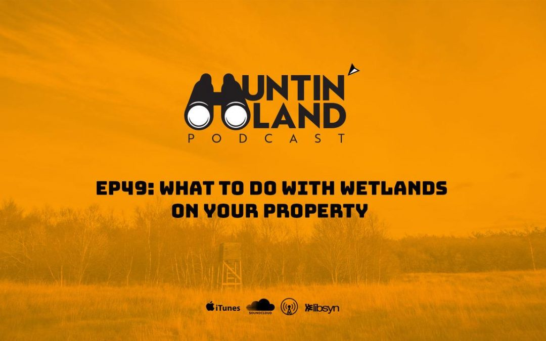 What To Do With Wetlands on Your Property