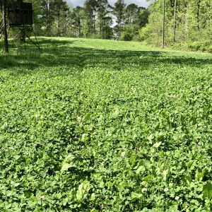 Picking the Best Food Plot for Deer in Fall and Winter