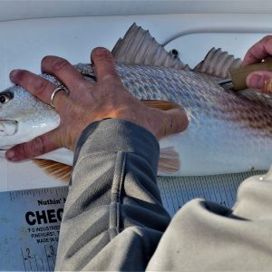 Alabama Car Tags that Aid Saltwater Fish Conservation