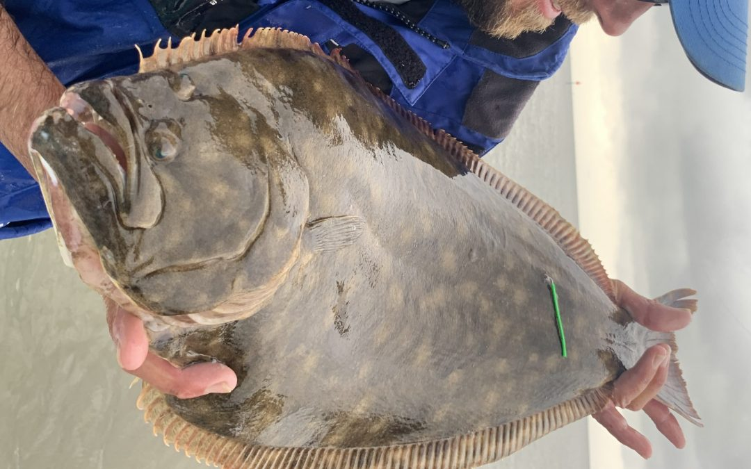 Selecting the Best Bait for Flounder Fishing