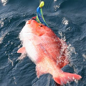 Alabama Announces Weekend Fishing for Red Snapper for Private Anglers