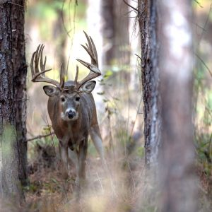 Alabama Trophy Deer Hunts for Every Budget