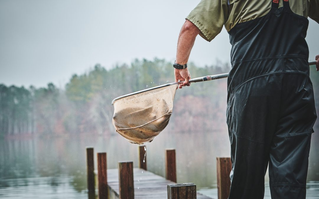 Rainbow Trout Stocking In Your Pond