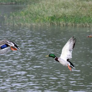 Choosing the Best Waterfowl Shotgun Choke for Any Situation