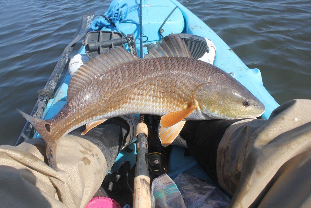 kayak caught redfish