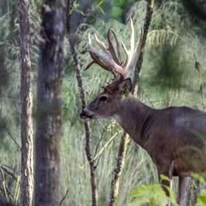The Best Hunting Times for Big Bucks