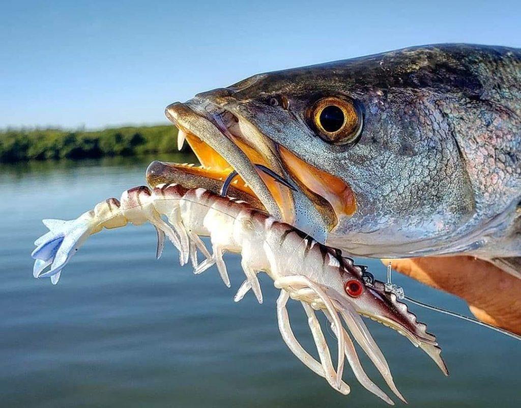 Bucking Shrimp