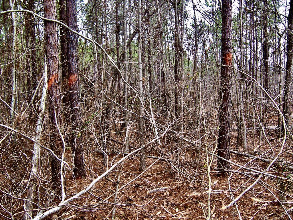 thick underbrush