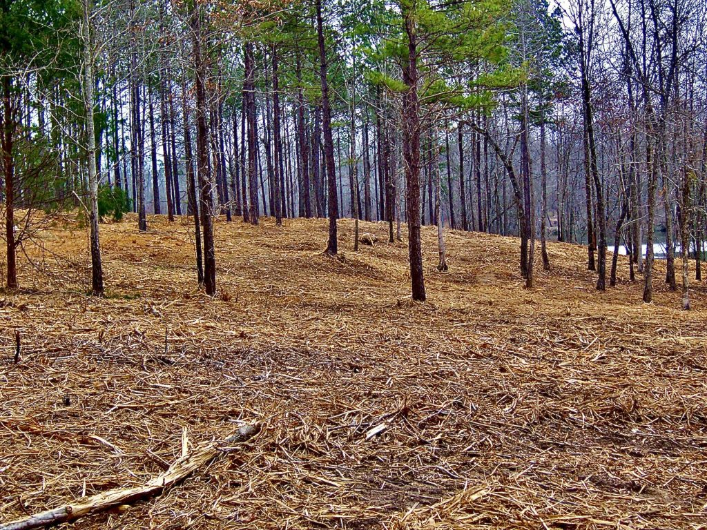 cleared out underbrush
