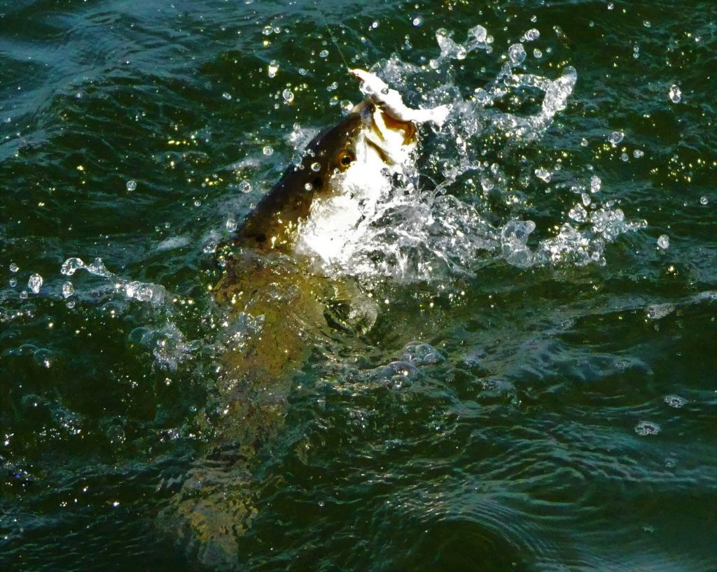 best speckled trout lures for winter