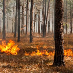 How To Do A Controlled Burn For Deer And Turkey