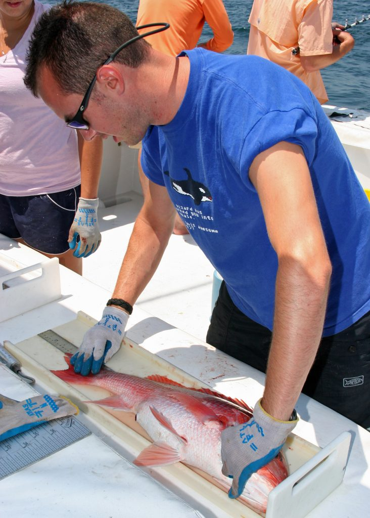 snapper tagging