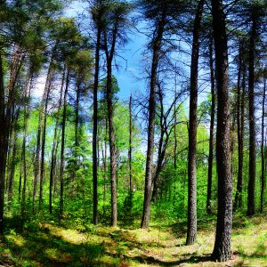 When to Choose a Forestry Mulcher for Wildlife Habitat