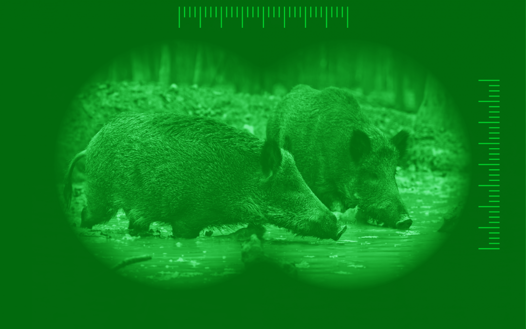 Selecting The Best Night Vision Optics For Hunting