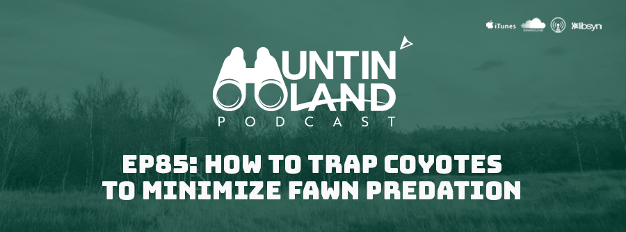 EP 85 How To Trap Coyotes To Minimize Fawn Predation