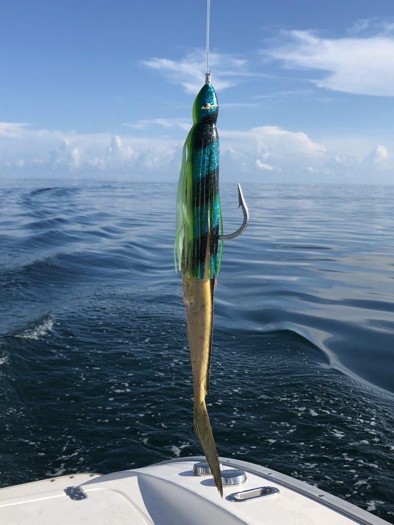 catching swordfish baited hook