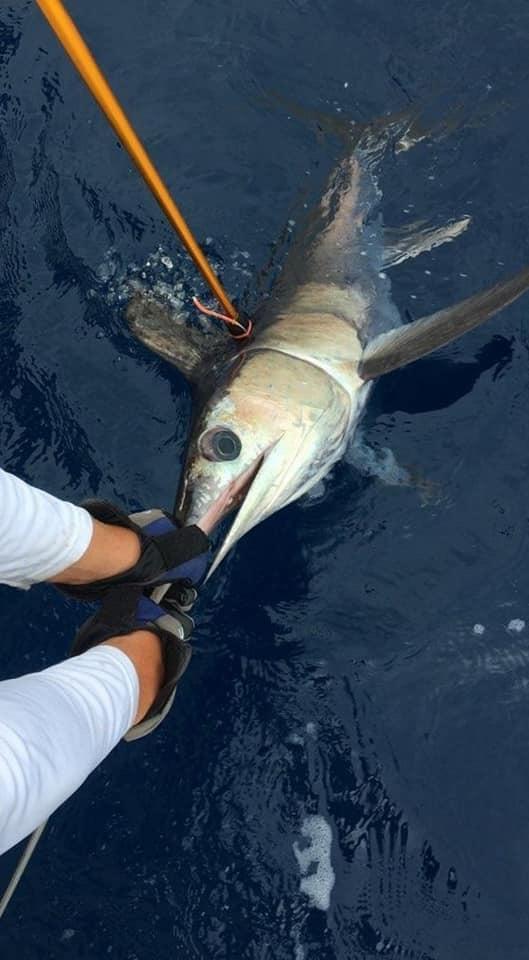 hooking swordfish