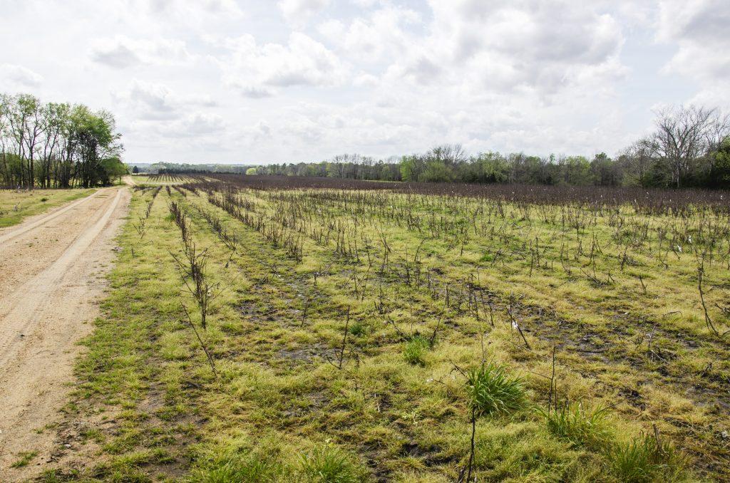 habitat management plan cotton field