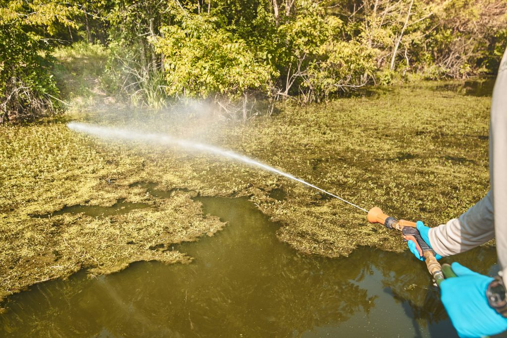 how to build a pond - weed control