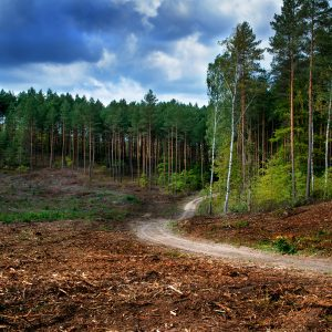 How to Clear Land Without Breaking the Bank